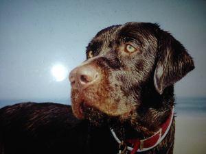 Fritz photo